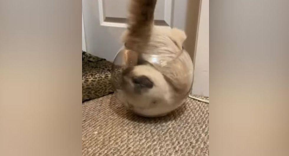 Cuando el felino vio la pecera vacía, inmediatamente se metió a ella. (YouTube: ViralHog)