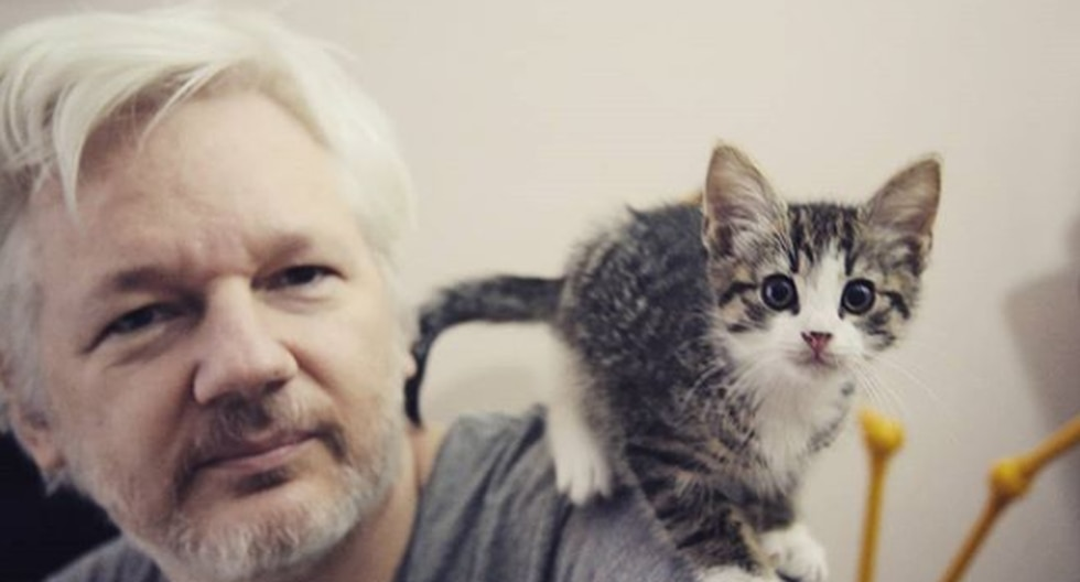 Julian Assange fue arrestado este jueves por la policía británica y desalojado de la embajada de Ecuador. (Instagram: Embassy Cat)