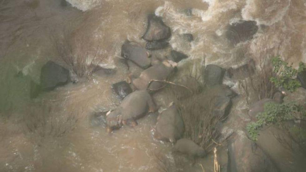 Las autoridades tailandesas señalaron que el incidente ocurrió luego de que un elefante bebé se cayera desde la cascada. (THAILAND DNP).