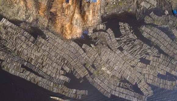 Base de datos de Mongabay Latam reveló que más de 127 000 árboles se extrajeron de manera ilegal en la Amazonía y los bosques secos del Perú. Foto: EIA