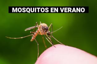 ¿Cómo lidiar con los mosquitos en verano?