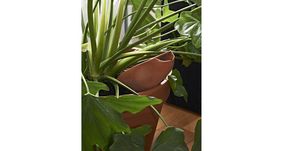 """Riega la raíz de tus plantas con """"Clay"""" - 3"""