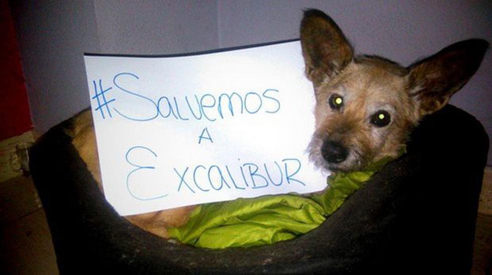 #SalvemosaExcalibur: la campaña multitudinaria que no sirvió - 1