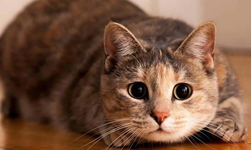 Esta leyenda urbana dice que si un gato se oculta y este es anciano, algo muy triste está por pasar y tienes que estar atento a las señales. (foto: Pixabay)
