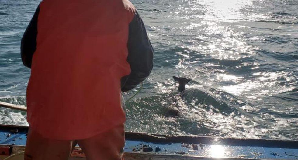 El animal fue hallado mar adentro a unas cinco millas de distancia de la costa de Harrington, en el estado estadounidense de Maine | Foto: Facebook / Ren Dorr