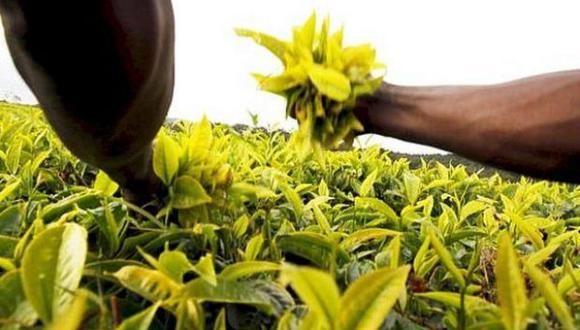 Recomiendan usar plaguicidas autorizados para evitar contaminación de alimentos