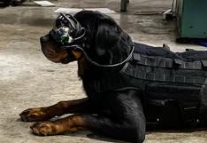 Los perros militares de EE.UU. llevarán gafas de realidad aumentada para cumplir órdenes en misiones complejas