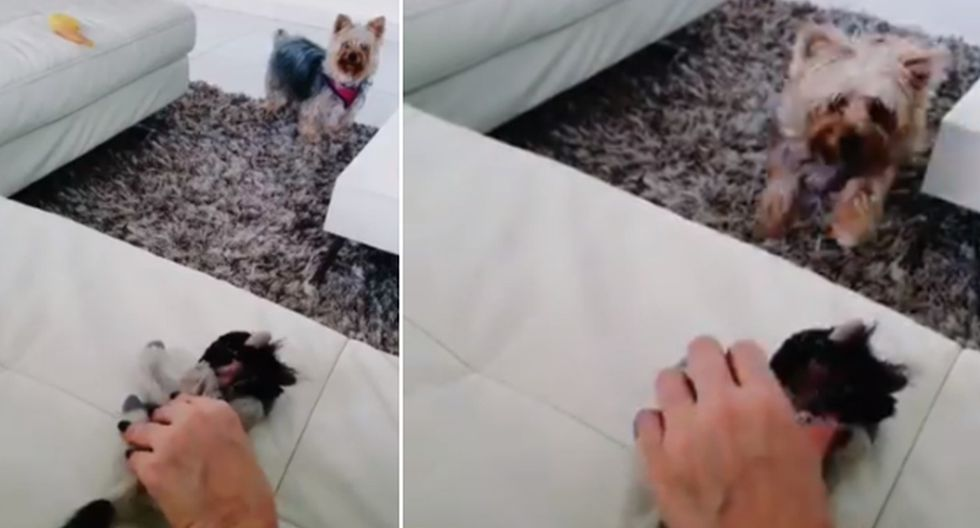 Foto 1 de 3 | El perro tuvo un comportamiento singular al ver a su dueña amorosa con un peluche. (Twitter: @ErgoProxy95)