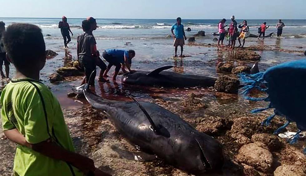 Indonesia: Hallan siete ballenas muertas en una playa. (Foto: AFP)