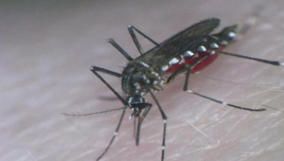 El INS recomendó mantener las viviendas limpias y eliminar los posibles criaderos de insectos. Asimismo se recomienda usar ropa liviana  y el uso de repelentes (Foto: archivo)