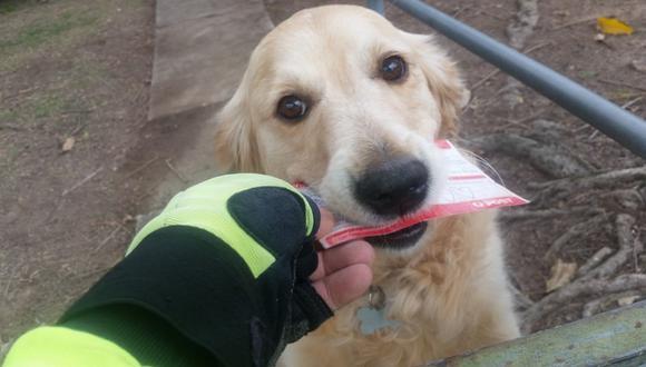 El cartero confiesa que las visitas a casa de la mascota son lo mejor de su jornada laboral. (Foto: Martin Studer en Facebook)