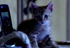 YouTube: mira esta parodia de Scream protagonizada por gatos