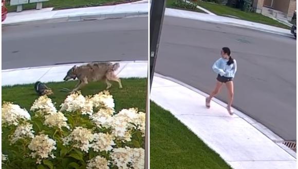 Una perrita yorkshire se enfrentó a un coyote para proteger a su dueña. (Foto: CityNews / YouTube)