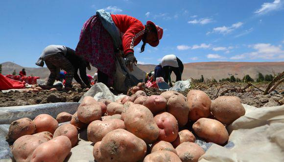 Desde el CPP, consideran que la parte laboral del régimen agrario debería ampliarse a las cadenas productivas del sector. (Foto: GEC)
