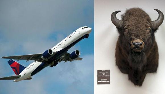 Aerolínea Delta prohíbe el transporte de trofeos de caza