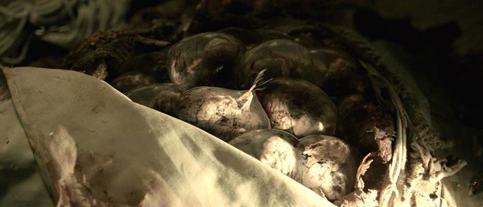 Así lucen los huevos de las Vesps (Foto: Netflix)