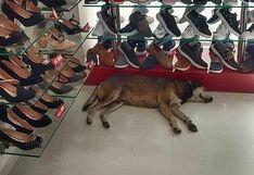 Dueño de tienda ignoró el pedido de clienta de echar a un perro callejero que entró para guarecerse de la lluvia