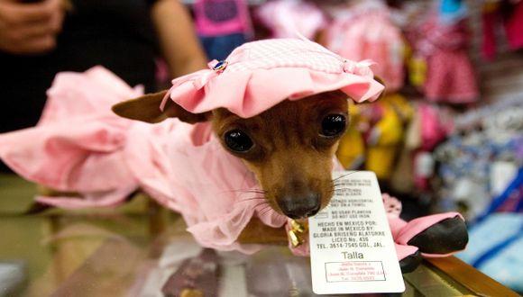 La enfermedad que ataca a los perros miniatura