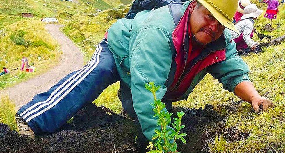 La sierra peruana es el territorio donde más se puede aprovechar el plantado de árboles.