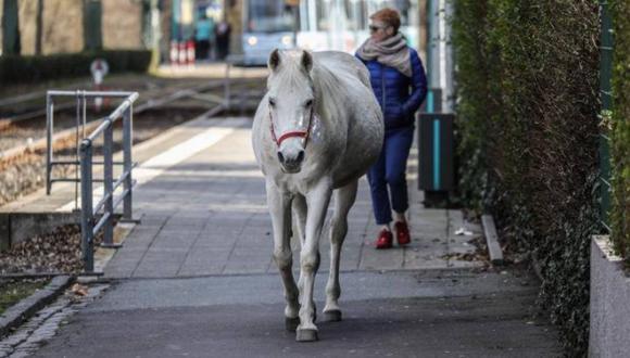 Una yegua de raza árabe asombra al mundo por sus solitarios recorridos en una tranquila localidad alemana. (Foto: Love Your Neighbour - YN - South Africans United en Facebook)