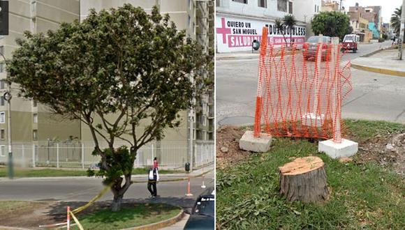 ¿Este árbol molestaba tanto para que lo talen?
