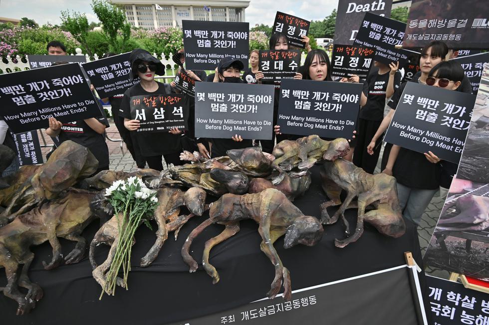 Los activistas por los derechos de los animales de Corea del Sur sostienen pancartas junto a imitaciones de perros muertos durante la protesta contra el comercio de carne de perro. Foto: AFP