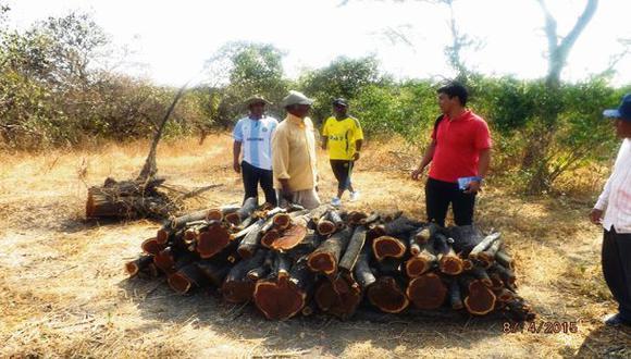 Lambayeque: 705.000 hectáreas de bosque están en peligro