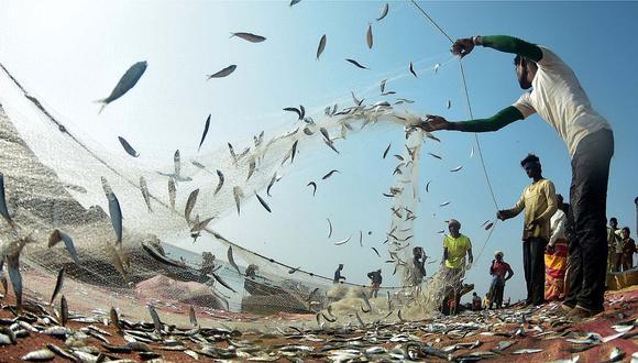 Se capturó el 35,9% de la cuota total asignada de anchoveta, informó el Produce.