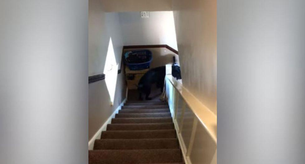 Pese a que podría considerarse doloroso ese accionar, el can estuvo como si nada. (YouTube: ViralHog)