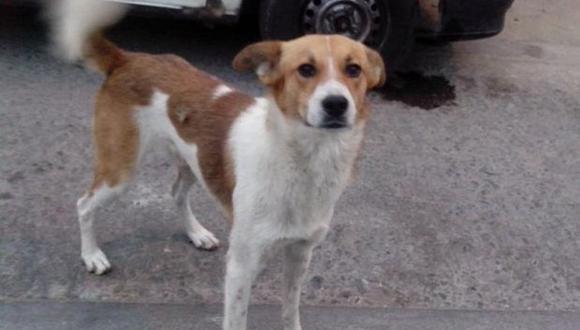 Policía fue detenido por estar implicado en muerte de un perro