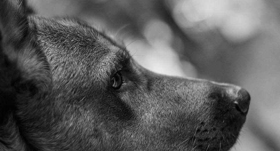 Muchos perros son protagonistas de hecho ocurrentes en redes sociales. La de Max es una de ellas que ha desatado risas a miles de internautas. (Pixabay)