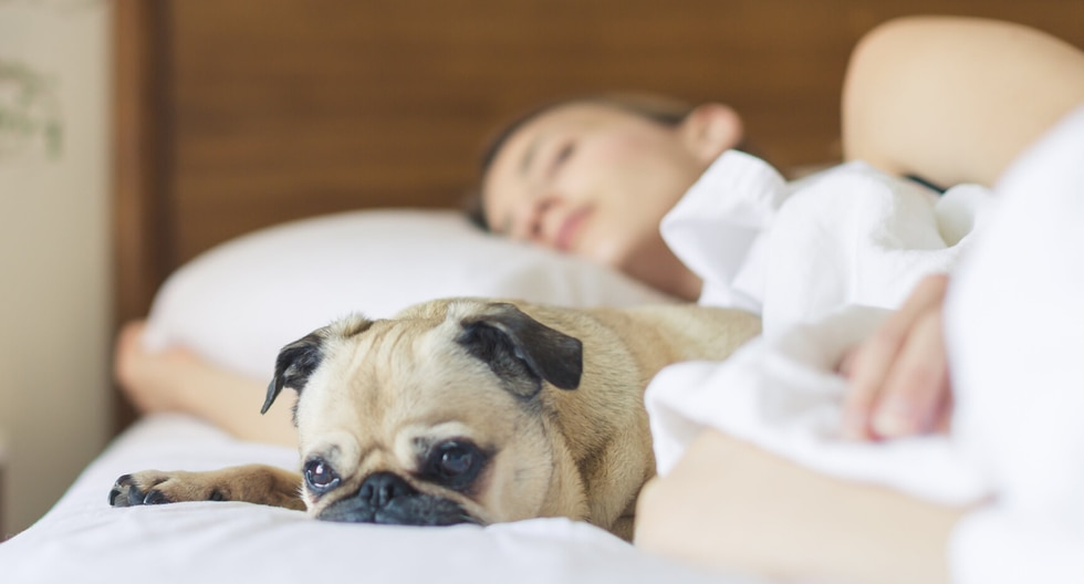 Contrario a la creencia popular, descansar a lado de tu mascota durante la noche no afecta en nada tu calidad de sueño y trae varios beneficios para tu salud. (Foto: Pexels/Referencial)