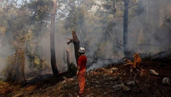 Los incendios forestales han quemado bosques enteros, dejando la tierra arrasada. (Foto: Reuters)