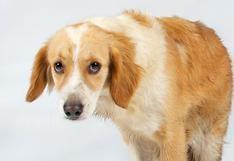 Conoce las señales que pueden revelar un cáncer en tu mascota para tratarla a tiempo