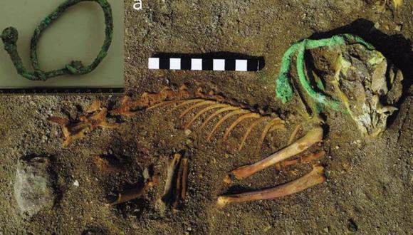 Restos de una macosta que aún conservaba su collar. (OSYPINSKA ET AL./WORLD ARCHEOLOGY)