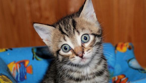 El gato fue hallado con síntomas de ahogamiento. (Foto: Referencial - Pixabay)