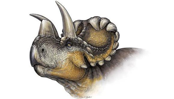 Descubren nueva especie de triceratops en Canadá