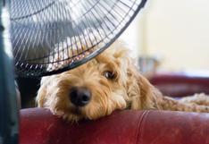 ¿Cuáles son los efectos del aire acondicionado en tu mascota y por qué no debemos exponerlas?