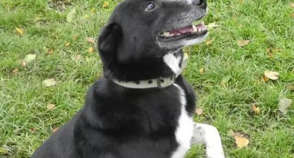 Se trata de 'Roy' y 'Bess', dos perros de raza border collie de los cuales uno de ellos tiene una grave discapacidad visual. (Foto: RSPCARehoming en YouTube)