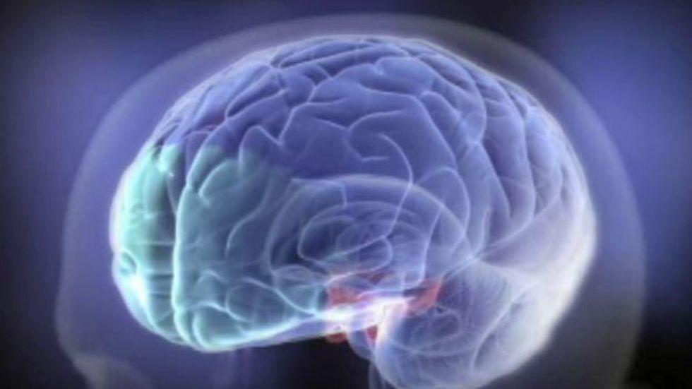 Los circuitos prefrontales (en verde) continúan cambiando en la edad adulta.
