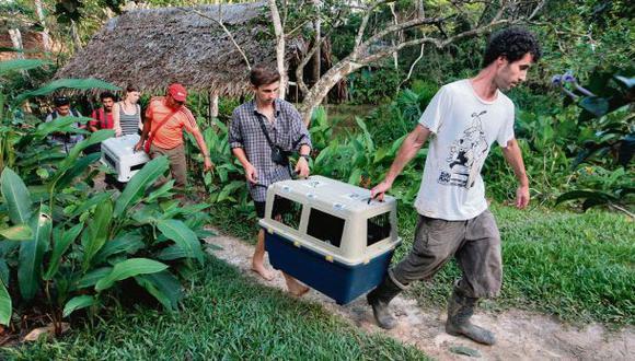 Voluntarios dejaron sus países por amor a la fauna peruana
