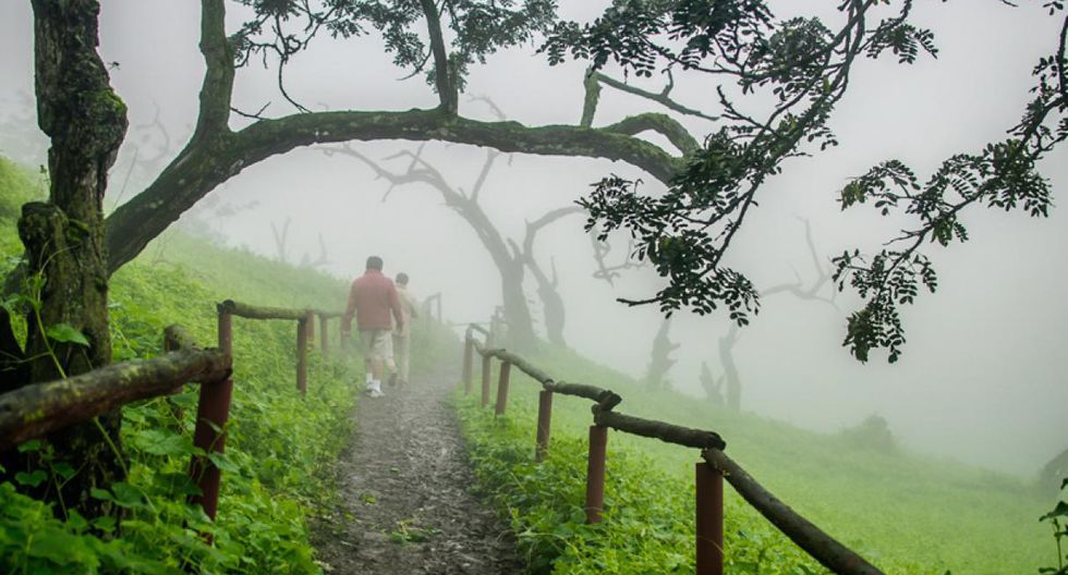 Trekking en la Reserva Nacional de Lachay. Ubicada en el kilómetro 105 de la Panamericana Norte, en la provincia de Chancay, esta reserva natural es perfecta para los amantes del trekking.