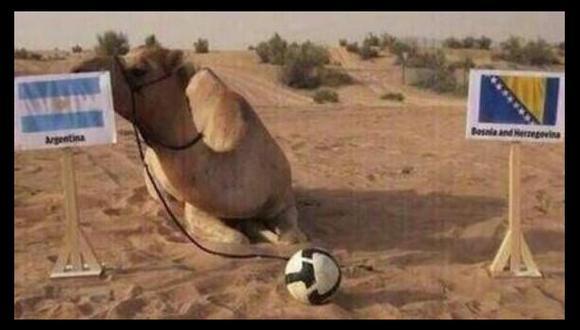 Brasil 2014: el camello Shaheen ya suma cuatro aciertos