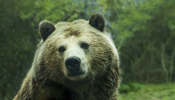 """Según los productores del programa, los osos nunca son obligados a participar en las pruebas y siempre """"reciben una gran recompensa con sus golosinas favoritas, antes, durante y después de cada evento""""."""
