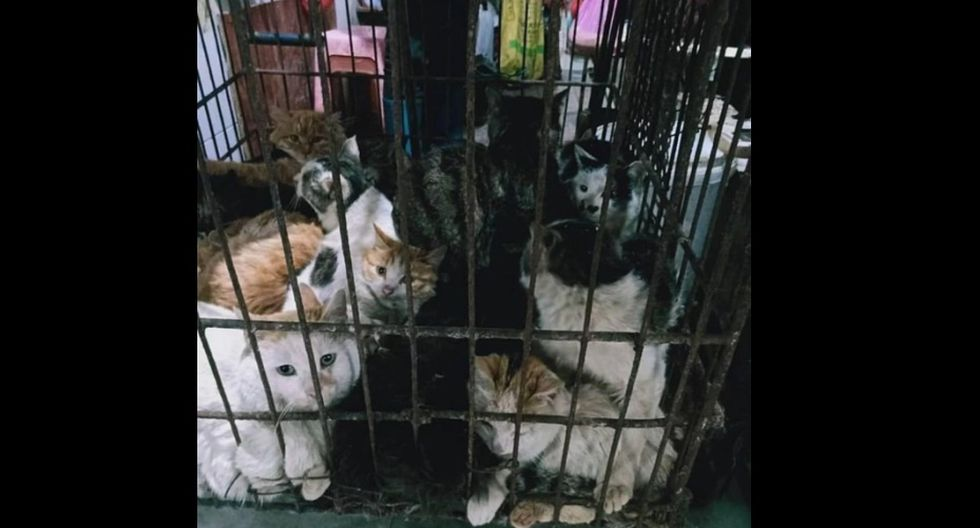 Perros y gatos son vendidos en mercados de China. (Foto: Captura Daily Mail)