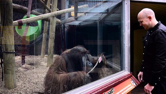 Orangután intenta imitar truco de magia de ilusionista [VIDEO]