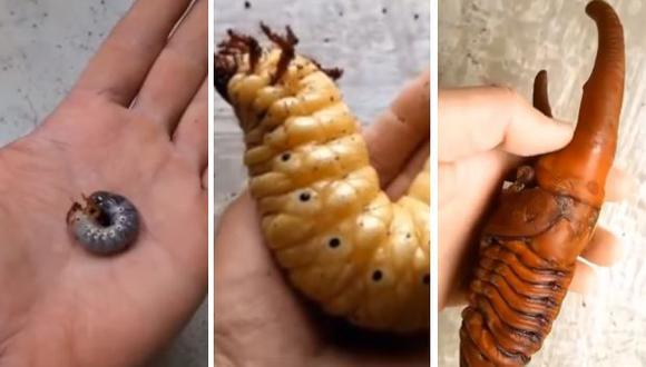 Esta especie de escarabajo puede encontrarse en los bosques de América Latina y el Caribe. (Foto: captura de Facebook/Composición)