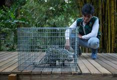 Tráfico de especies: la cadena de protección de la fauna silvestre en Madre de Dios | Reportaje fotográfico
