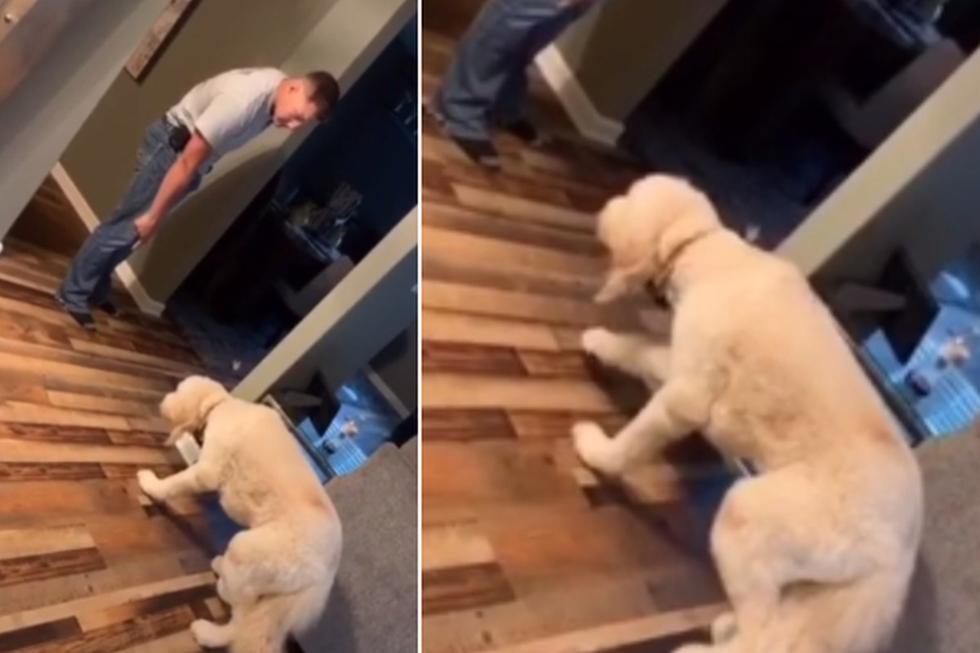 El perro tuvo una singular reacción al escuchar el llamado de su dueño tras hacer una travesura. (YouTube: ViralHog)