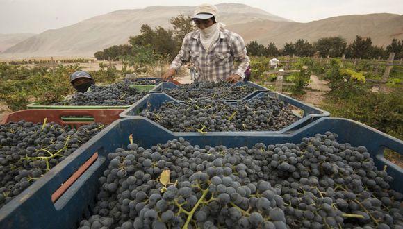 Negra criolla y moscatel son las principales variedades de uva de la región.(Foto: Flor Ruiz)